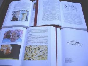 libro - enfermedades del conejo